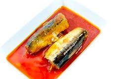 Законсервированные рыбы в томатном соусе на белой предпосылке стоковое фото rf