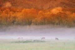 Закоптелая гора Morining Стоковое Изображение