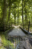 Заколдованная атмосфера в лесе Стоковое фото RF