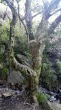 Заколдованное лесное дерево Стоковые Фото