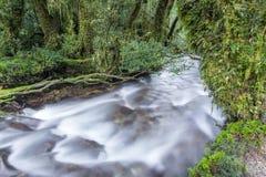 Заколдованный лес, национальный парк Queulat (Чили) стоковое фото