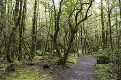 Заколдованный лес, Новая Зеландия Стоковые Фото