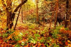 Заколдованный лес Стоковое Изображение
