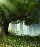 Заколдованный романтичный лес иллюстрация штока