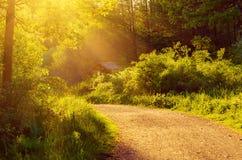 Заколдованный fairy лес Стоковые Изображения RF