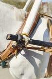 Закрепление тележки к воротнику лошади стоковое фото