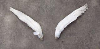 закрепленные крыла Стоковое Фото