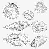 закрепляя изолированная белизна раковины моря путя Вручите вычерченные иллюстрации вектора - собрание seashells Комплект морского иллюстрация штока