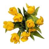 закрепляя изолированный желтый цвет тюльпанов верхней части путя стоковое изображение