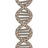 закрепляя путь двойного helix Стоковое Изображение RF