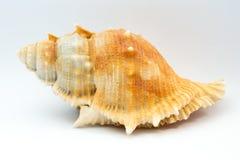 закрепляя изолированная белизна раковины моря путя Стоковые Фото
