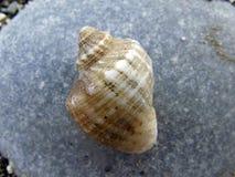 закрепляя изолированная белизна раковины моря путя стоковая фотография rf