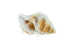 закрепляя изолированная белизна раковины моря путя Стоковые Изображения RF