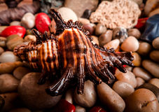 закрепляя изолированная белизна раковины моря путя Стоковые Фотографии RF