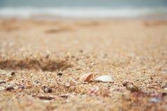 закрепляя изолированная белизна раковины моря путя Стоковые Изображения