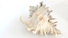 закрепляя изолированная белизна раковины моря путя Стоковое Изображение RF
