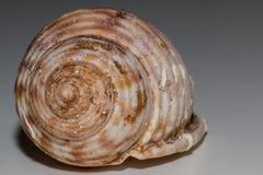 закрепляя изолированная белизна раковины моря путя Стоковое Изображение