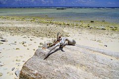 закрепляя изолированное море путя обстреливает белизну Стоковые Изображения