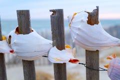 закрепляя изолированное море путя обстреливает белизну Стоковое Изображение RF