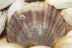 закрепляя изолированное море путя обстреливает белизну стоковое фото