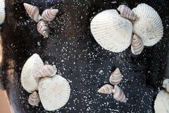 закрепляя изолированное море путя обстреливает белизну Стоковые Изображения RF