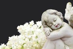 Закройте вверх ангела и белых цветков весны Стоковая Фотография