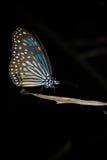 Закройте вверх бабочки Стоковое фото RF
