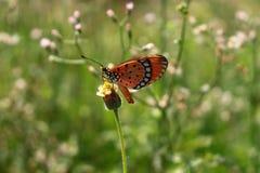 Закройте вверх бабочки Стоковые Фото