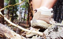 Закройте вверх ботинок женщины взбираясь дерево Стоковое фото RF