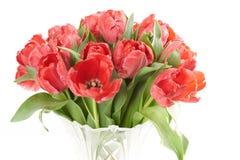 Закройте вверх букета красных свежих цветков тюльпанов после дождя Стоковое Фото