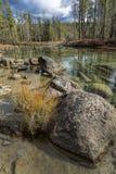 Закройте вверх валуна и травы в воде Стоковая Фотография