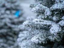 Закройте вверх ветвей дерева предусматриванных в некотором ярком белом снеге стоковая фотография rf