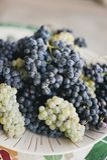 Закройте вверх виноградин вина на плите стоковое изображение