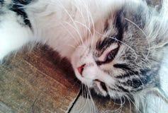 Закройте вверх вискера ` s кота Стоковые Изображения RF
