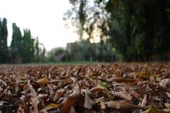 Закройте вверх высушенных листьев осени Стоковые Фотографии RF