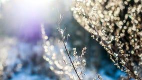 Закройте вверх в лесе в зимнем времени стоковые изображения rf