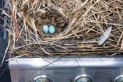 Закройте вверх 2 голубых яичек в гнезде построенном внутри гриля газа Стоковое фото RF