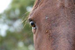 Закройте вверх головки лошади Стоковые Фотографии RF