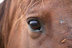 Закройте вверх головки лошади Стоковые Изображения RF