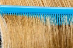 Закройте вверх голубого гребня в белокурых волосах Стоковые Фотографии RF