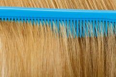Закройте вверх голубого гребня в белокурых волосах Стоковое Фото