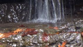 Закройте вверх гребней тяжелого рока предотвращая бассейн погружения на парке штата заводи лагеря водопадов вилки месива & лесе,  сток-видео