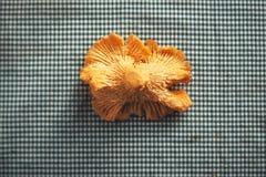 Закройте вверх гриба лисички Стоковое Фото