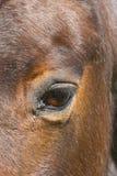 Закройте вверх глаза лошади Стоковые Изображения