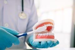 Закройте вверх дантиста руки держит челюсть dentures показывая как к стоковое фото rf