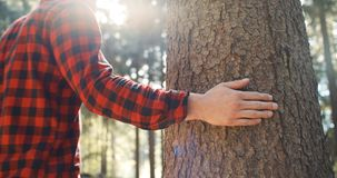 Закройте вверх дерева руки ` s человека касающего на зеленой предпосылке леса Стоковые Фото