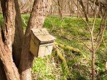 закройте вверх деревянного контейнера прикрепленного к стволу дерева в окружающей среде природы полесья Стоковые Фотографии RF