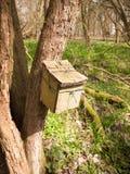 закройте вверх деревянного контейнера прикрепленного к стволу дерева в окружающей среде природы полесья Стоковое Изображение