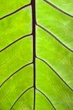 Закройте вверх лезвия лист Стоковые Изображения RF