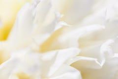 Закройте вверх лепестка белого цветка, teal, мягкого мечтательного изображения Стоковые Изображения